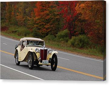 Canvas Print featuring the photograph Old Yeller 8168 by Guy Whiteley