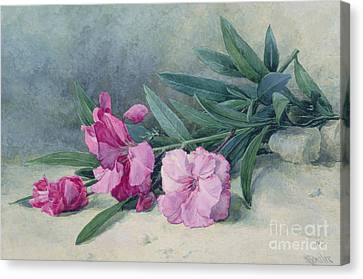 Oleander Blossom Canvas Print by Mary E Butler