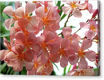 Canvas Print featuring the photograph Oleander Dr. Ragioneri 4 by Wilhelm Hufnagl