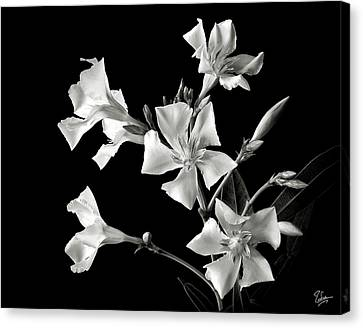 Oleander In Black And White Canvas Print by Endre Balogh