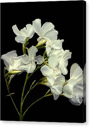 Oleander Canvas Print by Kurt Van Wagner