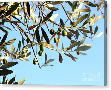 Olives And Branch Canvas Print