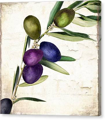 Italian Kitchen Canvas Print - Olive Branch II by Mindy Sommers