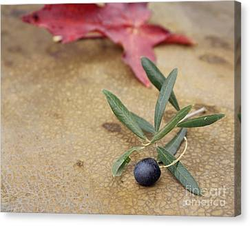 Canvas Print featuring the photograph Olive by Cindy Garber Iverson