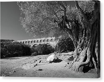 Olive Tree And Pont Du Gard, France Canvas Print by Richard Goodrich