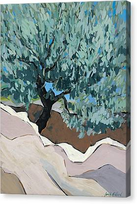 Olive Tree In Crevice Canvas Print by Sarah Gillard