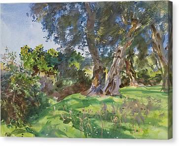Corfu Canvas Print - Olive Trees, Corfu by John Singer Sargent