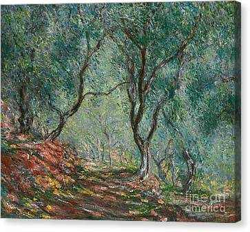 Dappled Light Canvas Print - Olive Trees In The Moreno Garden by Claude Monet