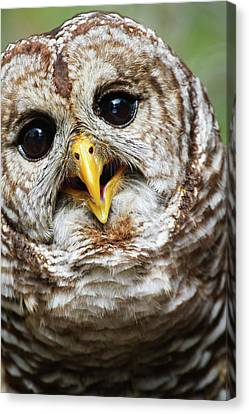 Canvas Print featuring the photograph Oliver Owl by Arthur Dodd