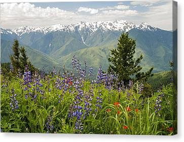Olympic Mountain Wildflowers Canvas Print by Brian Harig