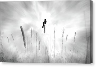Canvas Print featuring the photograph Omen by John Poon