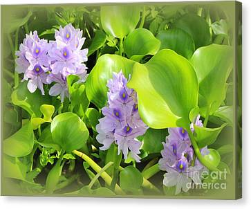 Tropical Water Lilies In Full Bloom Canvas Print