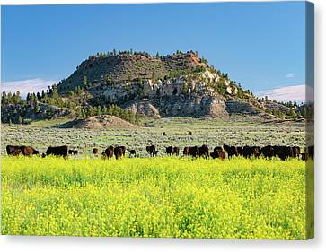 On A Field Of Yellow Canvas Print