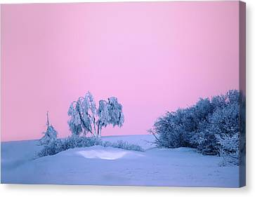 On A Magical Wintery Morning.... Canvas Print