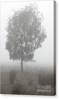 Canvas Print featuring the photograph On A Winter's Morning by Linda Lees
