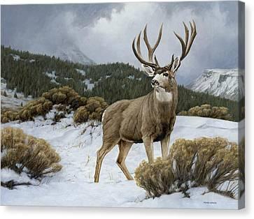 Mule Deer Buck Canvas Print - On Alert by Peter Eades