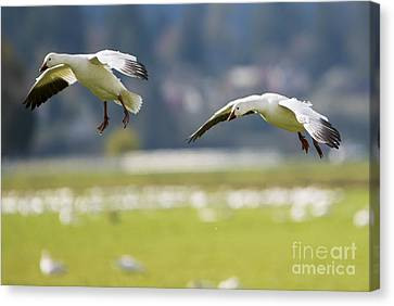 On Approach Canvas Print by Mike Dawson