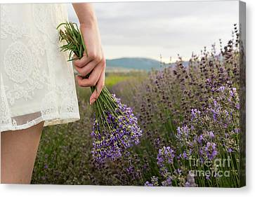 On Lavender Field Girl In White Dress Holding Bouquet Canvas Print by Maria Kutinska