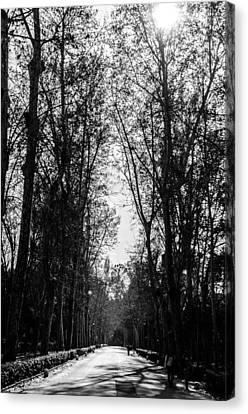 Serenity Canvas Print - On My Way - Blackandwhite Landscape by Andrea Mazzocchetti