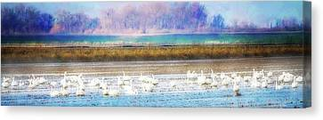 On The Delta Panorama Canvas Print by Terry Davis