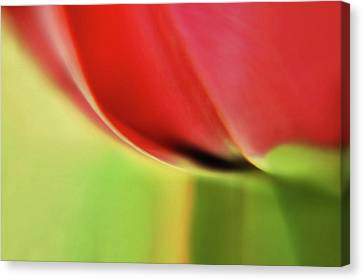 Canvas Print featuring the photograph  Tulip's  Edge by Elaine Manley