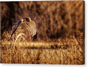 Canvas Print featuring the photograph On The Hunt by Annette Hugen
