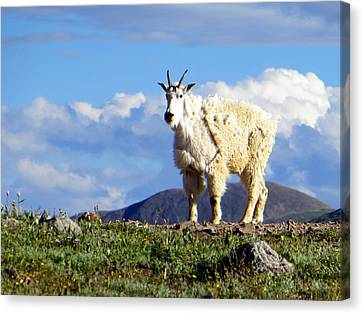 Canvas Print featuring the photograph On The Mountain Top by Karen Shackles