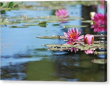 Canvas Print featuring the photograph On The Pond by Amee Cave