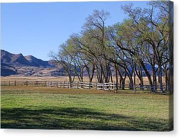 Canvas Print featuring the photograph On The Ranch by Ely Arsha