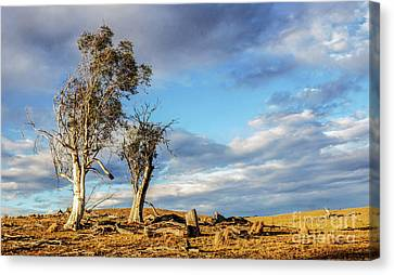On The Road To Cooma Canvas Print
