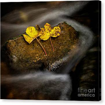 On The Rocks Canvas Print by Adrian Evans