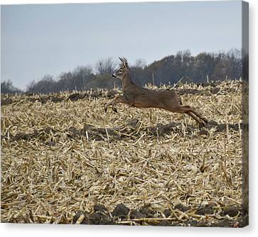 On The Run Canvas Print