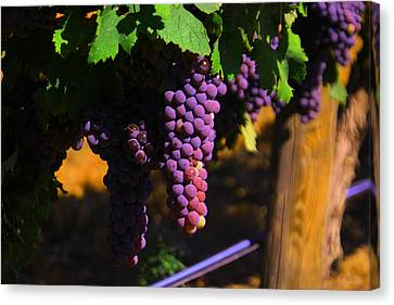 On The Vine Canvas Print by Jeff Swan