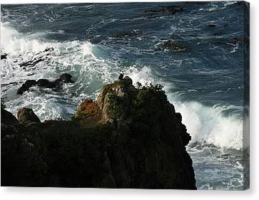 On Watch Canvas Print by Terry Perham