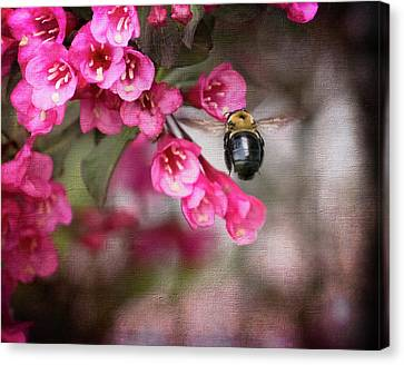On Wine And Roses Weigela - 2 Canvas Print