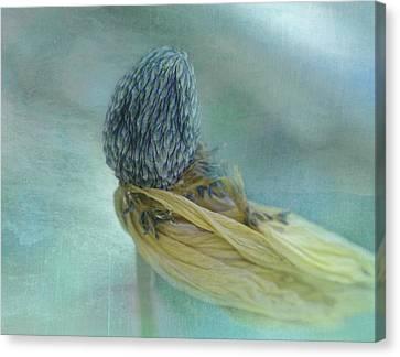 On Wings Of Wind Canvas Print by Adriana Kastelan