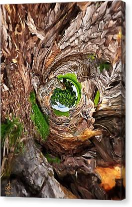 Canvas Print featuring the photograph Once A Tree by Pennie  McCracken