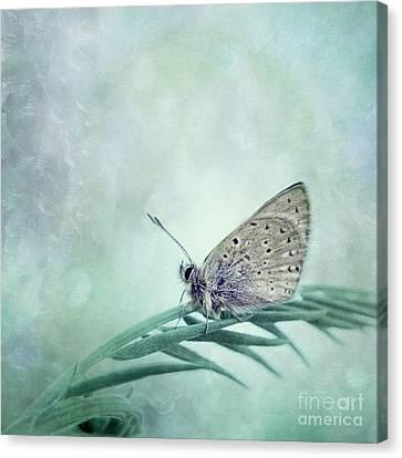 Once In A Blue Moon Canvas Print by Priska Wettstein