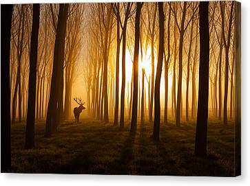 Once Upon A Time Canvas Print by Nafets Norim