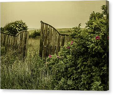 Once Was A Garden Canvas Print by Odd Jeppesen