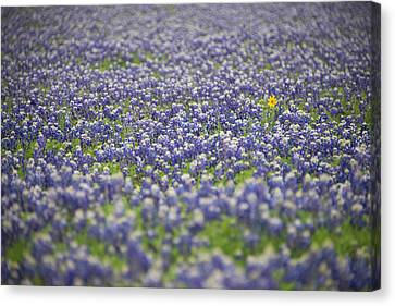 New Individuals Canvas Print - One by Aaron Bedell