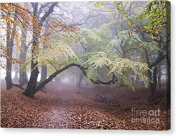 Mystical Landscape Canvas Print - One Autumn Morning  by Tim Gainey
