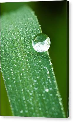 Canvas Print featuring the photograph One Big Drop by Monte Stevens