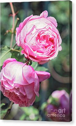 Canvas Print featuring the photograph One Bold, One Bashful by Linda Lees