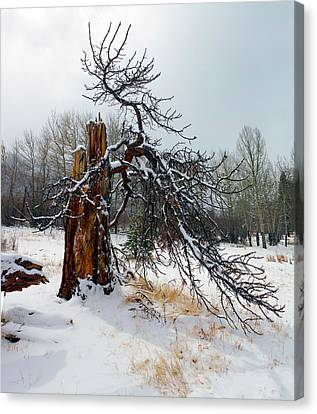 Canvas Print featuring the photograph One Branch Left by Shane Bechler