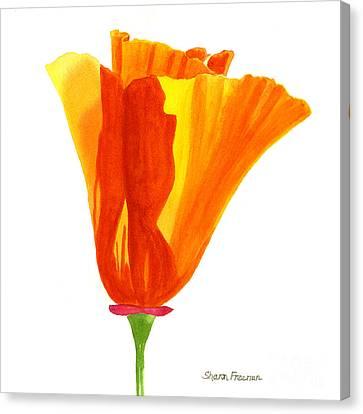 One California Poppy Flower Canvas Print by Sharon Freeman