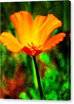 One California Poppy Canvas Print by Fred Baird