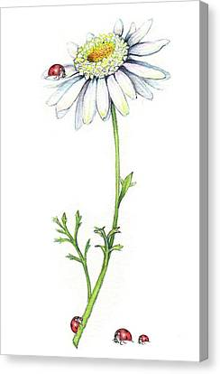 Canvas Print featuring the painting One Daisy And Four Ladybugs by Heidi Kriel