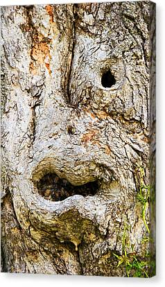 One Eye Tree Face Canvas Print