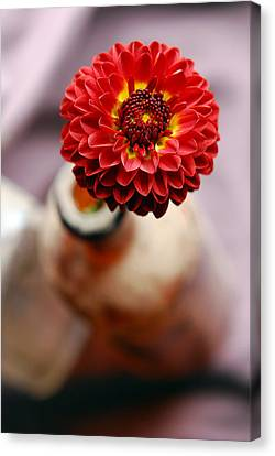 One Flower In Old Bottle Canvas Print by Laura Mountainspring